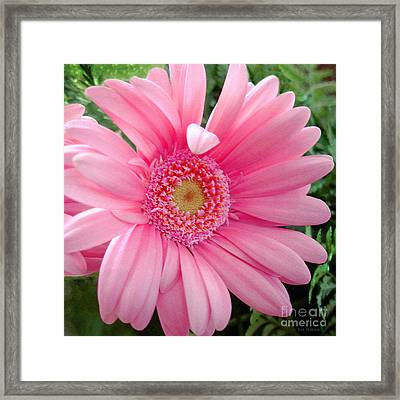 The Friendly Petal Wave Framed Print by Sue Melvin