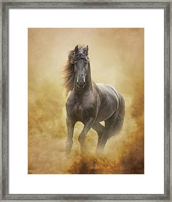 The Friesian King Framed Print by Ron  McGinnis