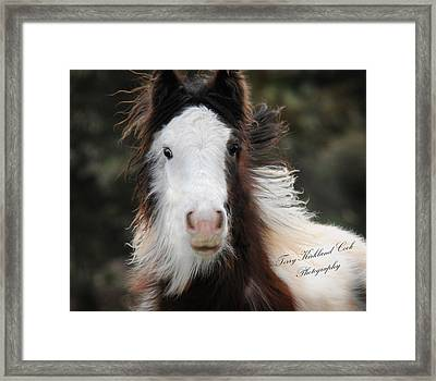 The Fuzziest Gypsy Foal Framed Print