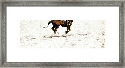 The Galloping  Framed Print by Steven Digman