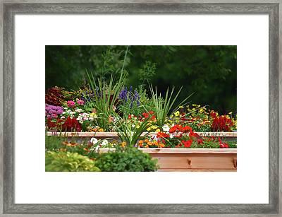 The Garden Beds Framed Print