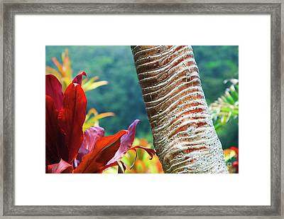 The Garden Of Love Framed Print by Sharon Mau