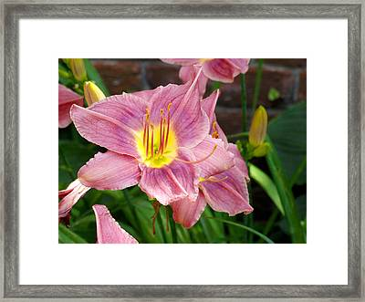 The Garden Violet Lily Framed Print by Mike McGlothlen