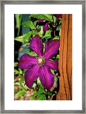 The Garden Wall Framed Print