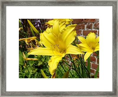 The Garden Yellow Lily Framed Print by Mike McGlothlen