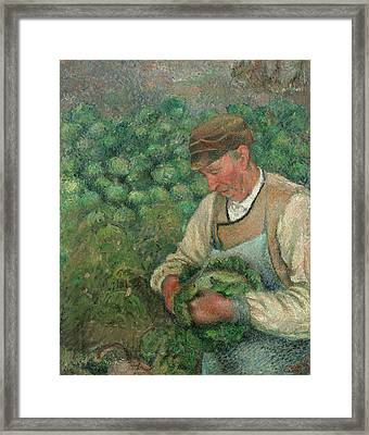 The Gardener - Old Peasant With Cabbage Framed Print