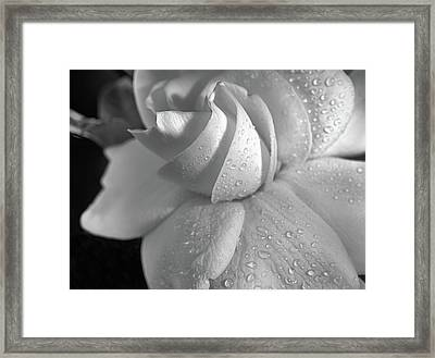 The Gardenia In Black And White Framed Print by JC Findley