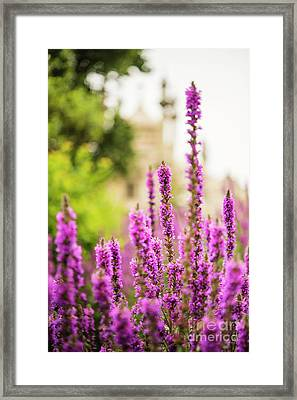 The Gardens Of The Royal Pavilion Framed Print by MaryJane Armstrong
