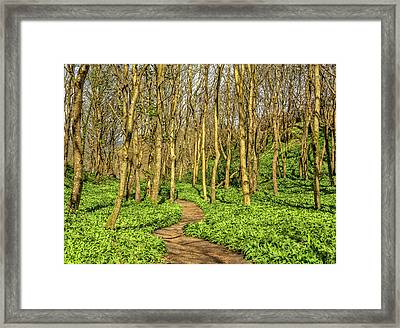 The Garlic Forest Framed Print by Roy McPeak