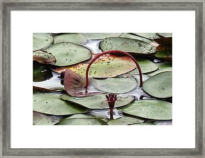The Gateway Framed Print by I'ina Van Lawick