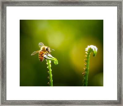 The Gatherer 1 Framed Print by Mark Andrew Thomas