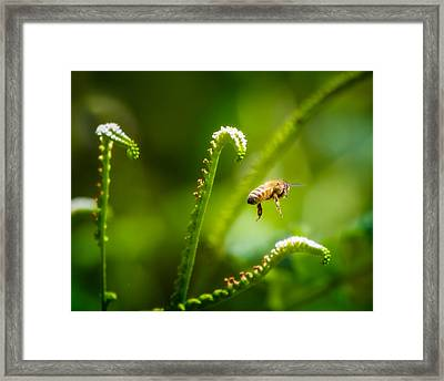 The Gatherer 3 Framed Print by Mark Andrew Thomas