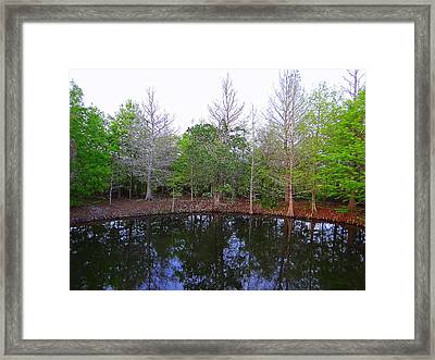 The Gator Hole At Green Cay In Florida Framed Print