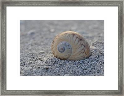 Framed Print featuring the photograph The Gaudy Nautica by Melanie Moraga