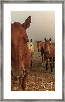 The Gauntlet - Horses Framed Print