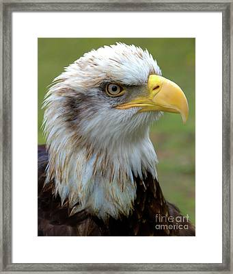 The Gaurdian Framed Print by Stephen Melia