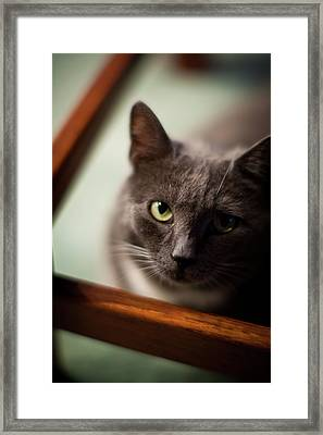 The Gaze Framed Print by Mike Reid