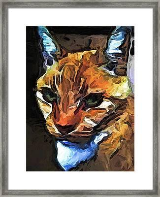The Gaze Of The Gold Cat Framed Print