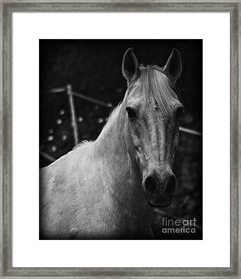 The General Framed Print by Clare Bevan