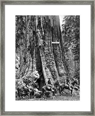 The General Grant Tree Framed Print