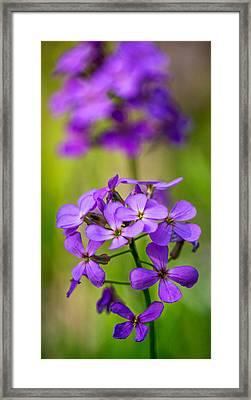 The Gentleness Of Spring 3 Framed Print by Steve Harrington