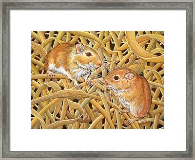 The Gerbils Framed Print by Ditz