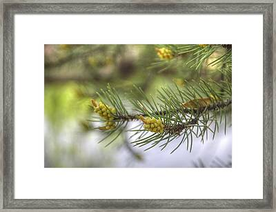 The Gift Of Life Framed Print by Thomas  Todd