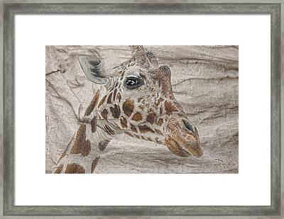 Framed Print featuring the photograph The Giraffe  by Dyle   Warren