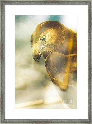 The Glass Case Eagle Framed Print by Jorgo Photography - Wall Art Gallery
