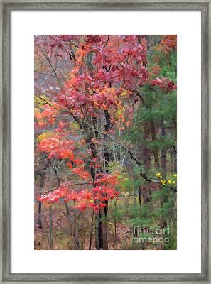 The Glory Of Fall Framed Print by Roberta Byram