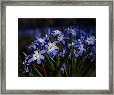 The Glory Of The Snow Framed Print