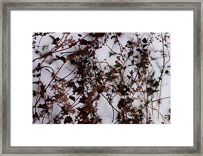 The Glory Of Winter Morn Framed Print by Rahdne Zola