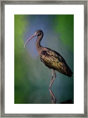 The Glossy Ibis Stroll Framed Print