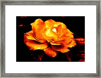 The Glow Of Amber.... Framed Print