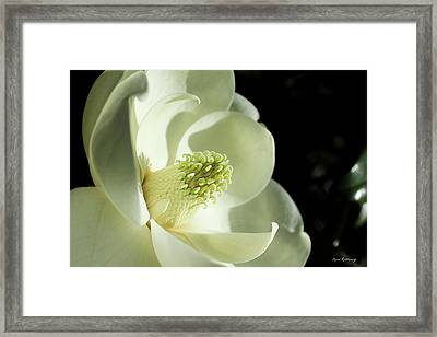 The Glow Of Southern Beauty Magnolia Flower Art Framed Print