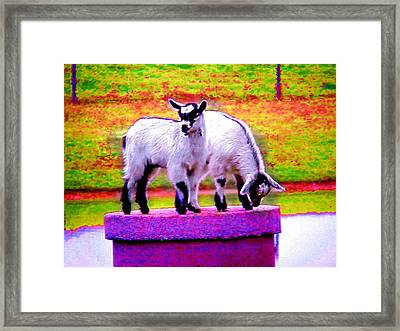 The Goats Framed Print