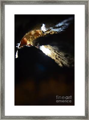 The Golden Eagle Framed Print
