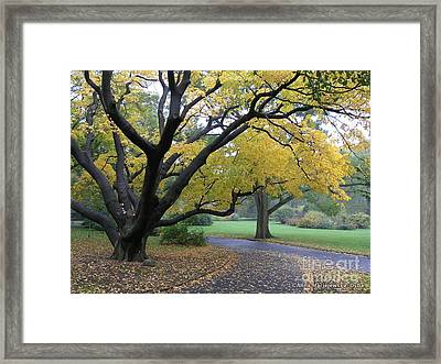 The Golden Fall Framed Print by Anna Folkartanna Maciejewska-Dyba