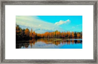 The Golden Forest At Woodcraft Camp Framed Print by David Patterson