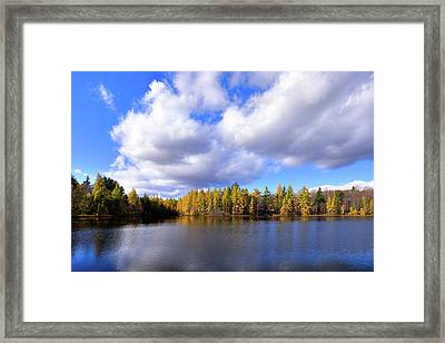Framed Print featuring the photograph The Golden Forest At Woodcraft by David Patterson