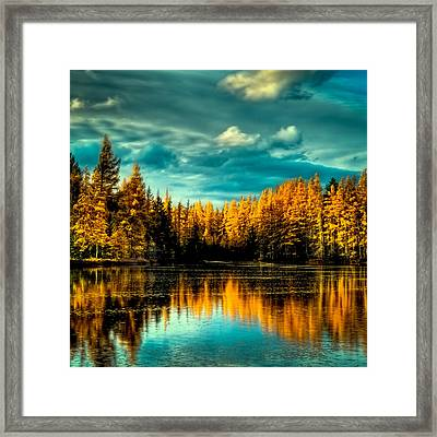 The Golden Forest Framed Print by David Patterson
