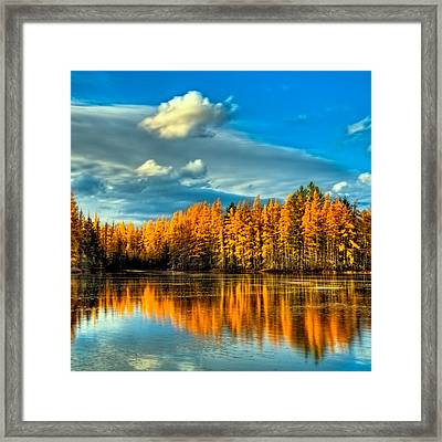 The Golden Forest In The Adirondacks Framed Print by David Patterson
