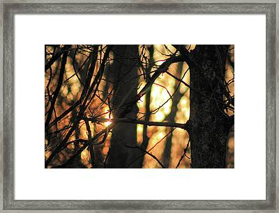 Framed Print featuring the photograph The Golden Hour by Bruce Patrick Smith