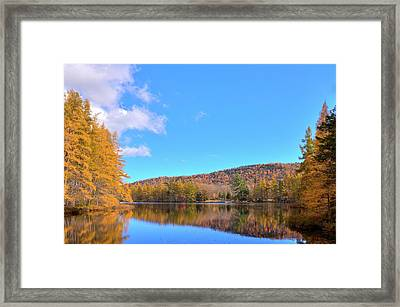 Framed Print featuring the photograph The Golden Tamaracks Of Woodcraft Camp by David Patterson