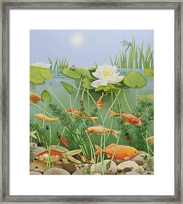 The Golden Touch Framed Print