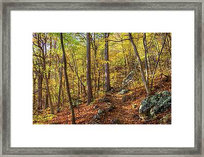 Framed Print featuring the photograph The Golden Trail by Lori Coleman