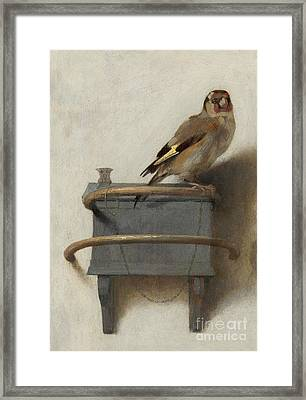 The Goldfinch, 1654  Framed Print by Carel Fabritius