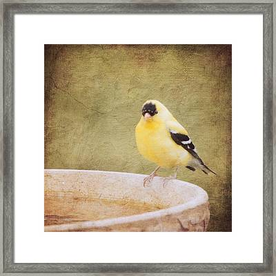The Goldfinch Painting Effect Framed Print