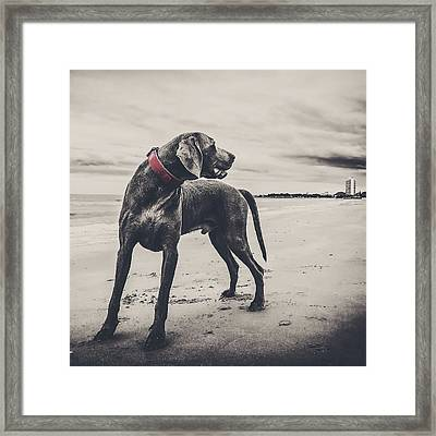 The Good Boy Framed Print