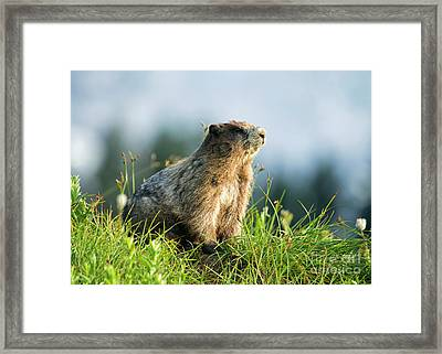 The Good Side Framed Print by Mike Dawson